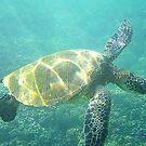 Maui Sea Turtle by Bob Moore