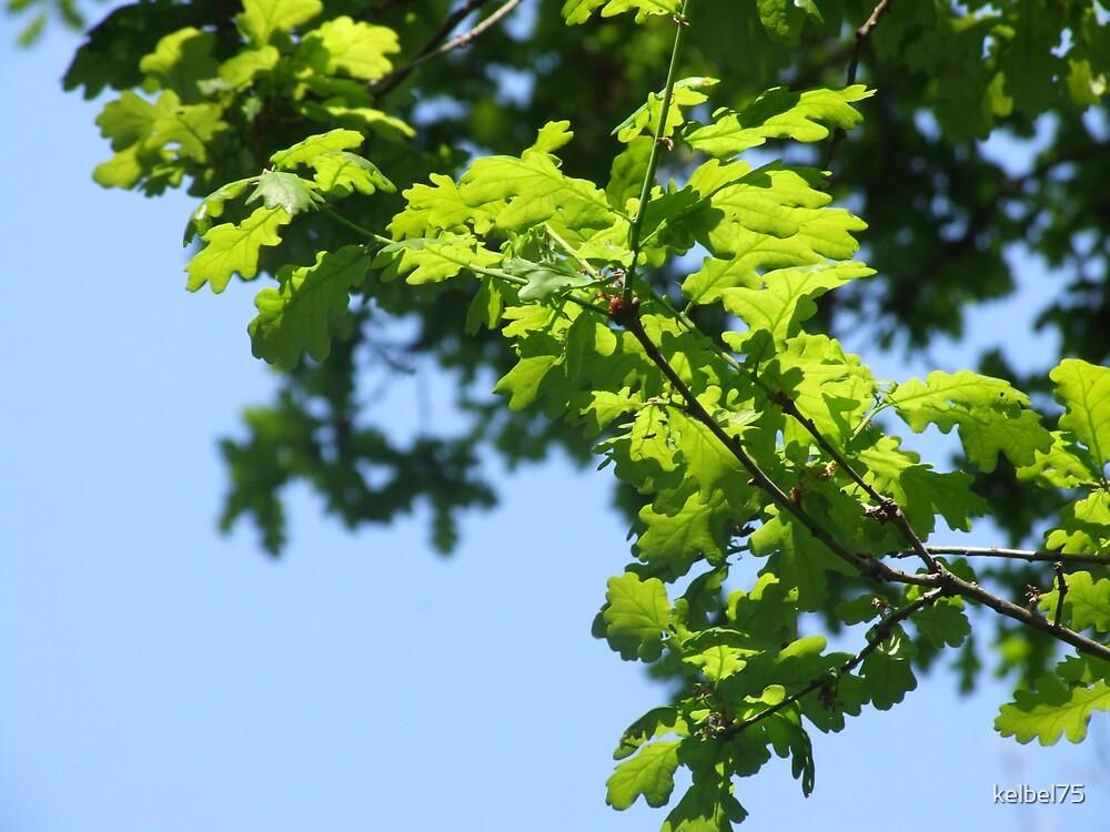 Leaves#2 by kelbel75