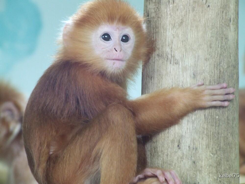 Monkey by kelbel75