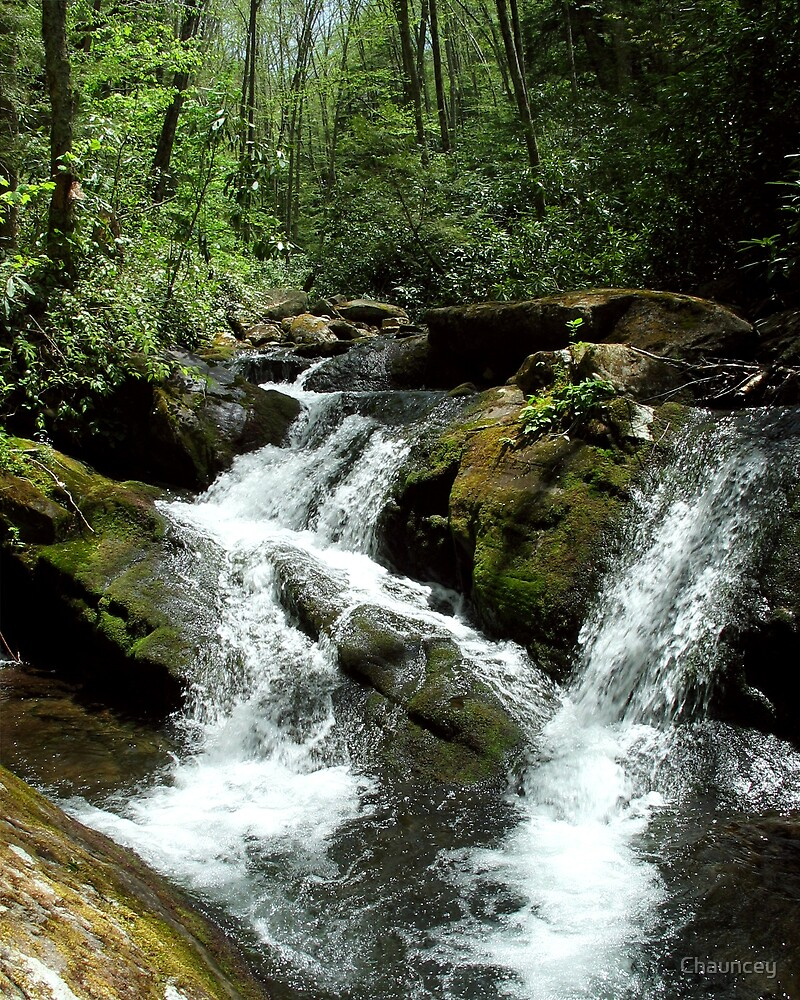 Mountain Brook by Chauncey