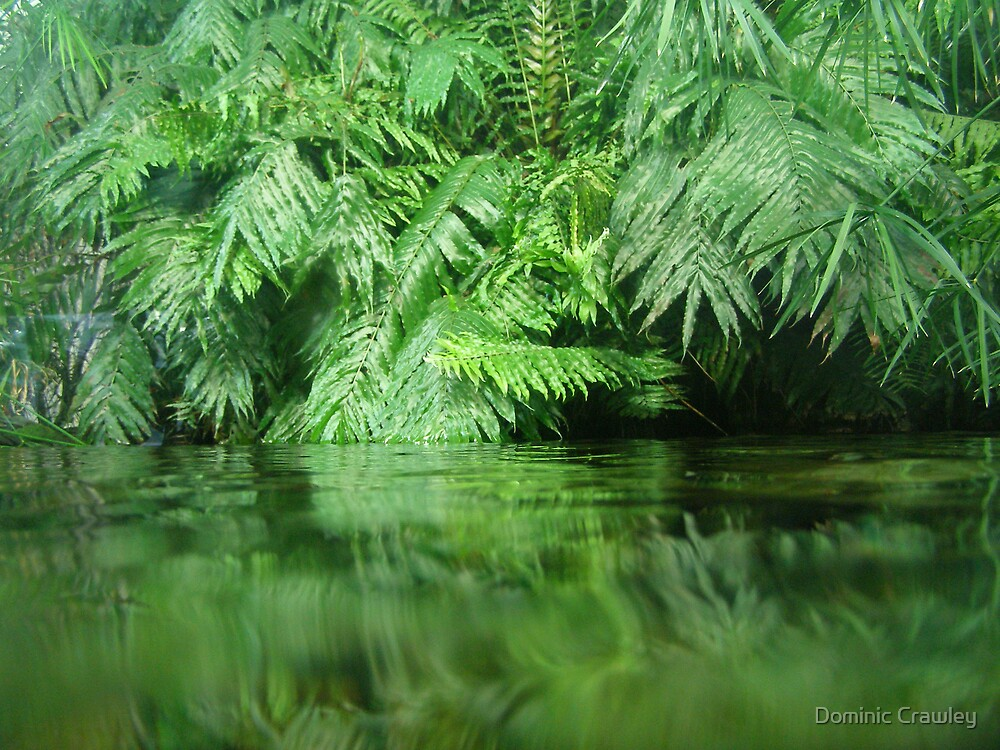 Fern over water by Dominic Crawley
