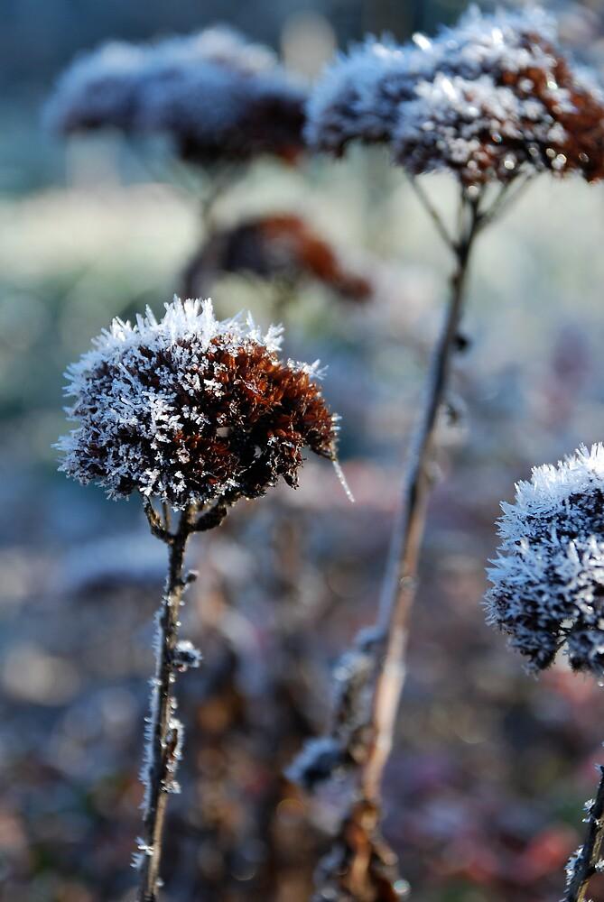 Frost 2 by Hazel Wallace