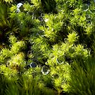 Miniature Forest #3 by farmboy