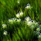 Miniature Forest #8 by farmboy