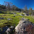 Moss covered rocks by farmboy