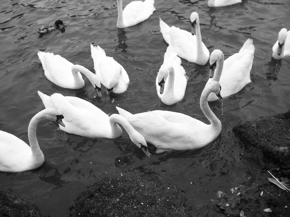 swans by scream961