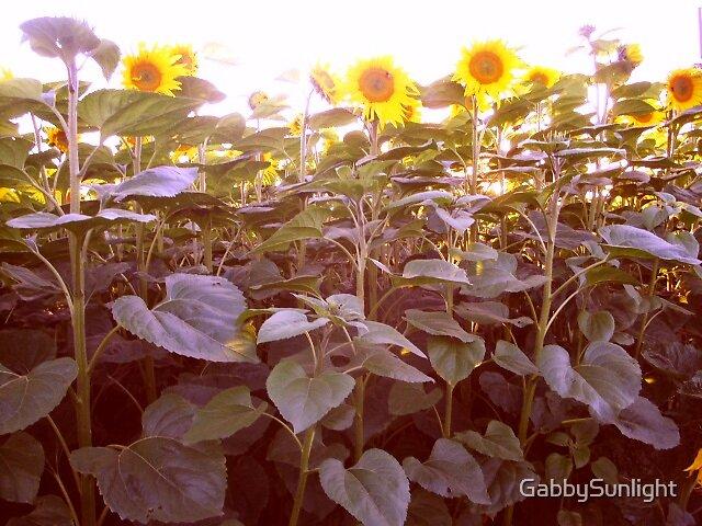 A field of sunflowers by GabbySunlight