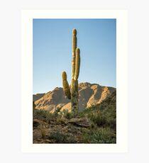 Lonley Cactus in Saguaro National Park Art Print