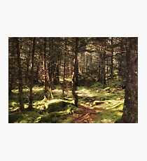 Enchanted Forest. Photographic Print