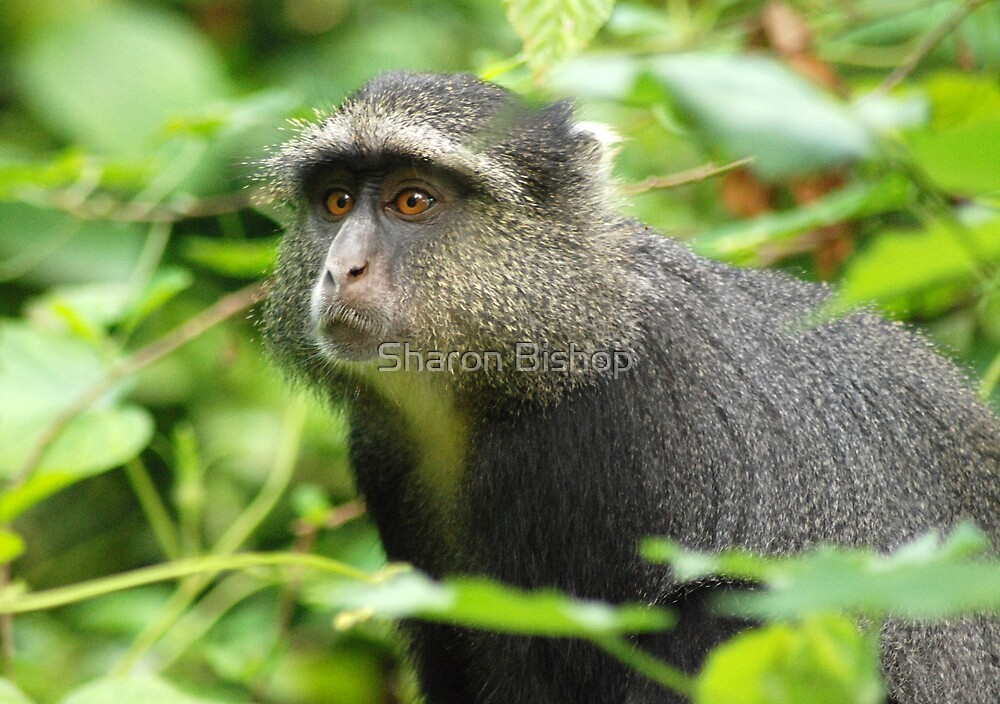 Blue monkey. by Sharon Bishop