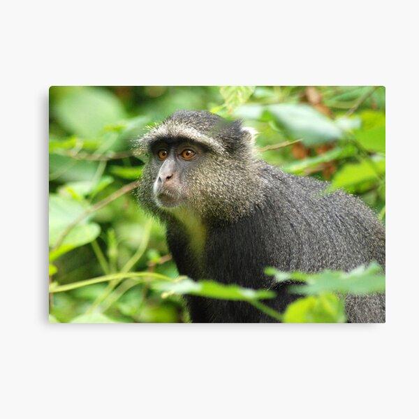 Blue monkey. Canvas Print