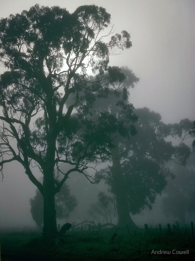 gums in the mist by Andrew Cowell