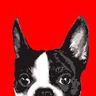 Boston Terrier by Rich Anderson