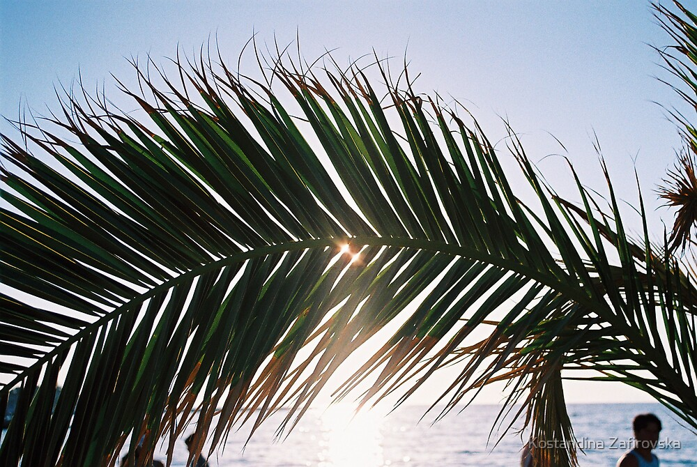 palm tree with sun by Kostandina Zafirovska