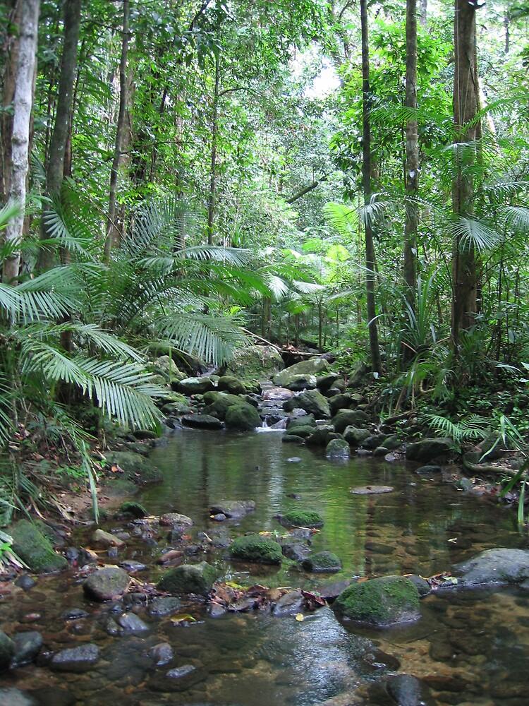 Waterfall - Mossman Gorge by Liz Cooper