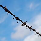 barbed wire by michael hogarth