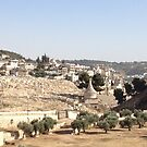 Israel Landscape 2 by Barberelli