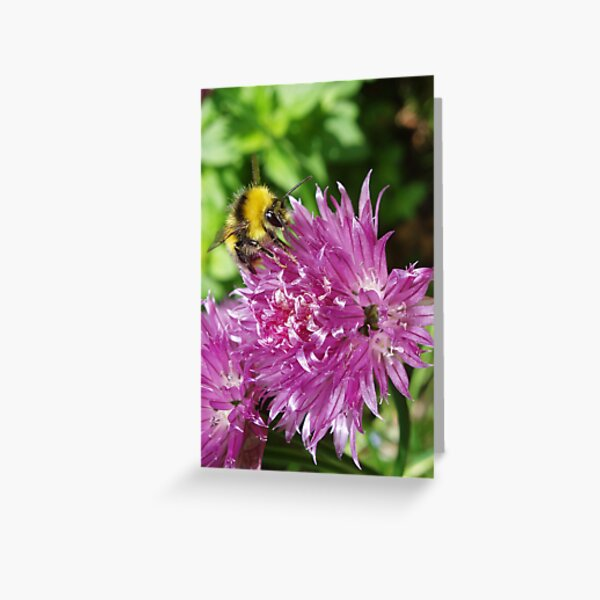 Chive Bee Greeting Card