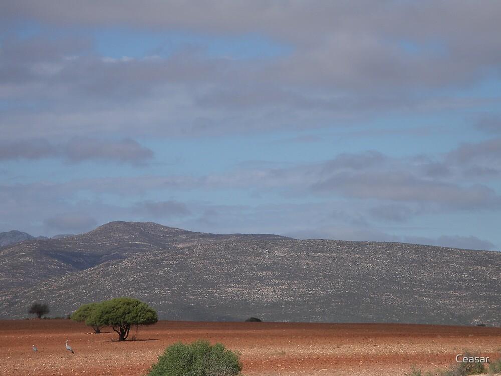 Karoo Landscape by Ceasar