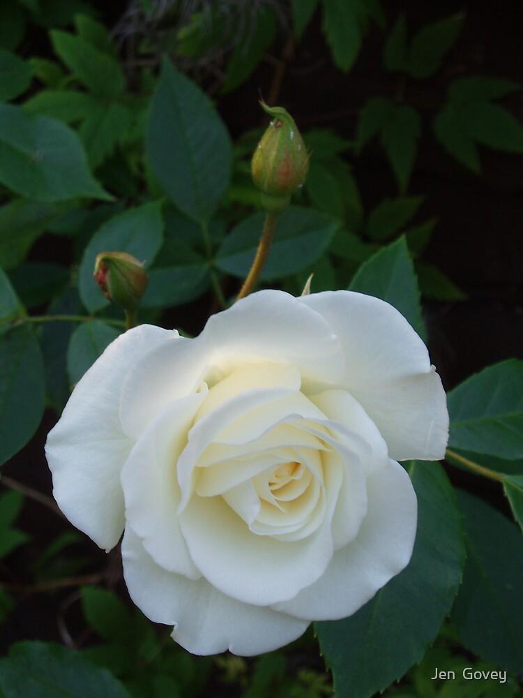 English Rose by Jen  Govey