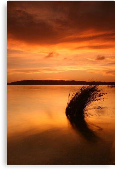 Lake Wollumboola Sunset #1 by Noel Elliot