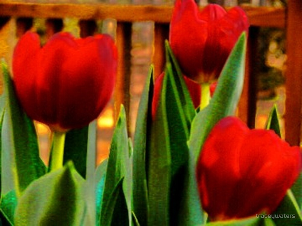Red Tulips by traceywaters