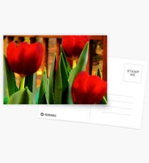 Red Tulips Postcards