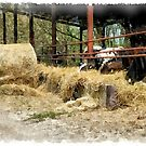 Cows and hay by Giuseppe Cocco