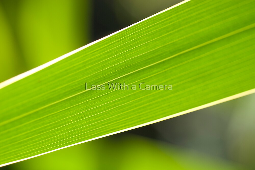 Leaf Lines by Lass With a Camera