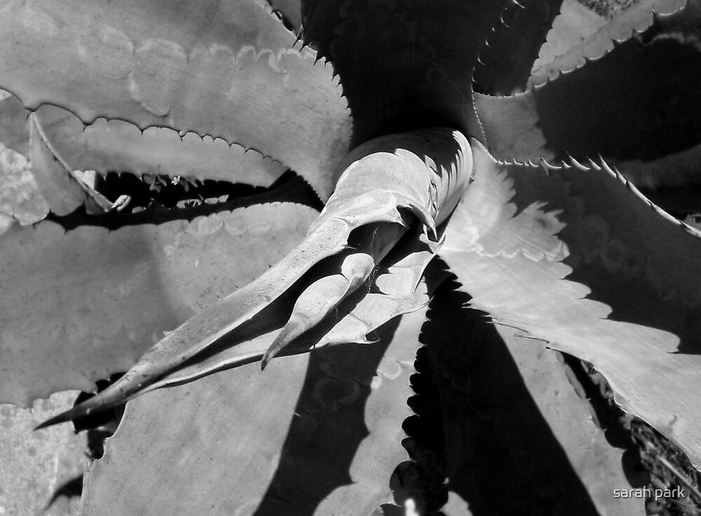 agave art by sarah park