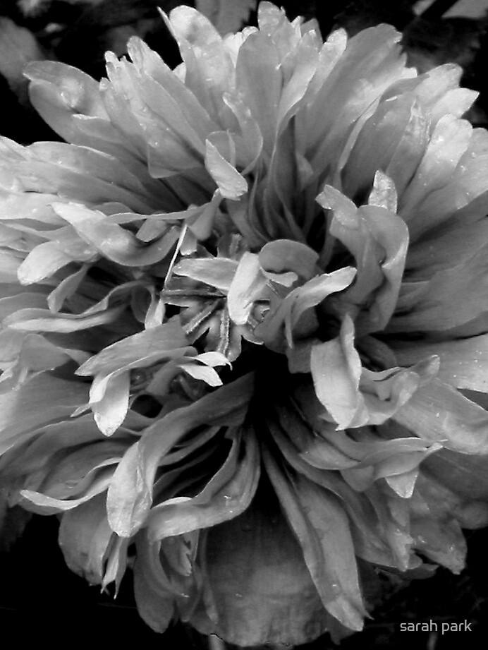 poppy head  by sarahcro123