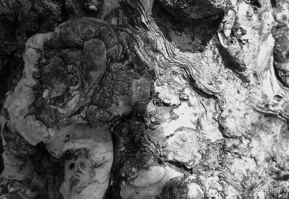 gnarled bark by sarah park