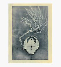 Tortoise Shell and Plant Skeleton Photographic Print