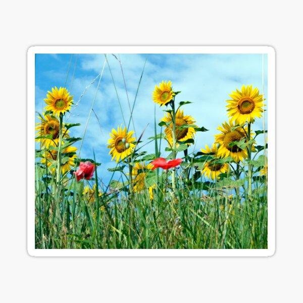 Sunflower and Poppy Field II Sticker