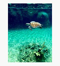 Sea Turtle Swimming Through Ocean Photographic Print