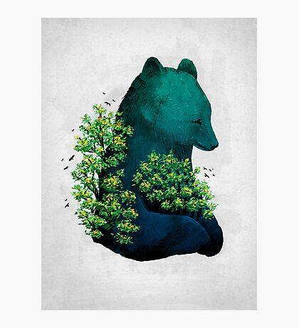 Nature's Embrace Photographic Print