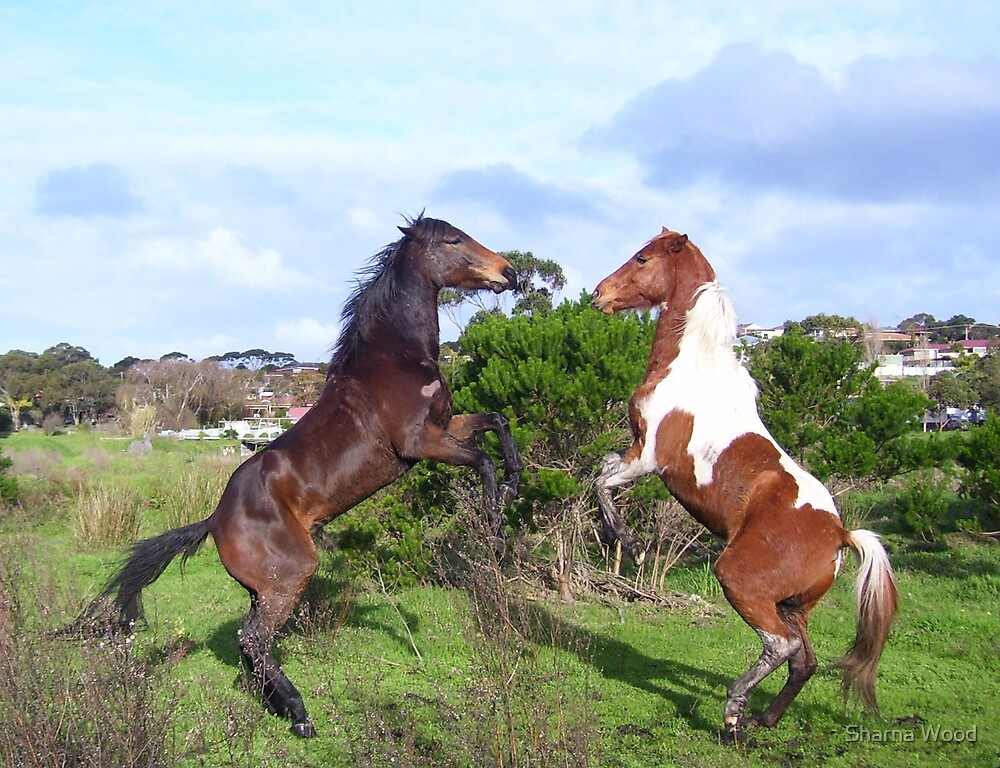 Danny and Yarra Playing by Sharna Wood