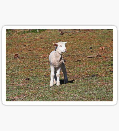 Kleines Lamm verloren Sticker