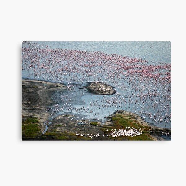 Flamingoes of Lake Nakuru, Kenya. Canvas Print