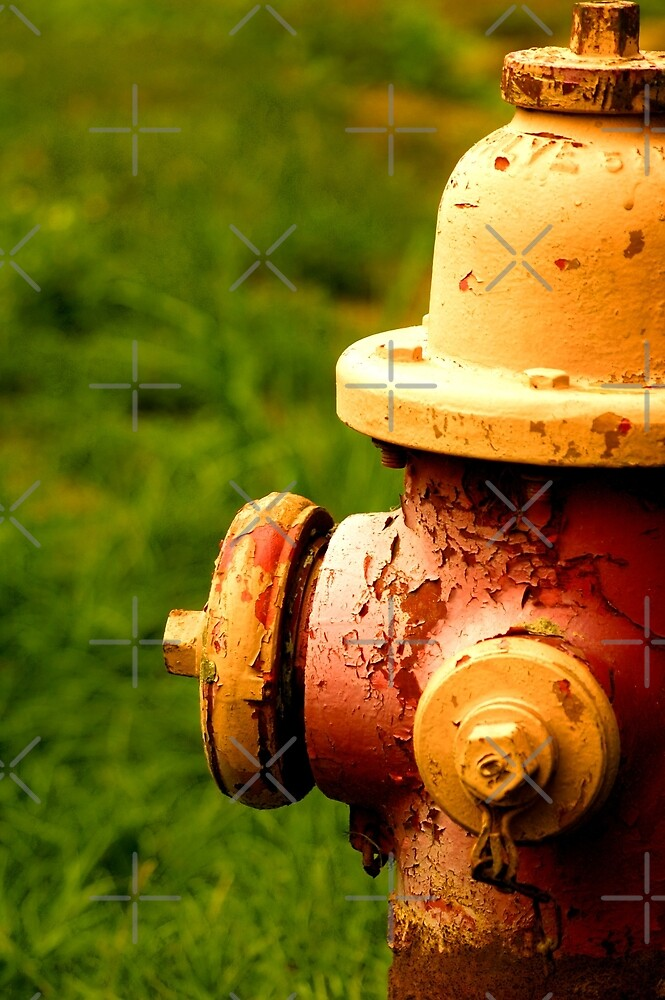 Well Worn Hydrant by Angie Seiffert