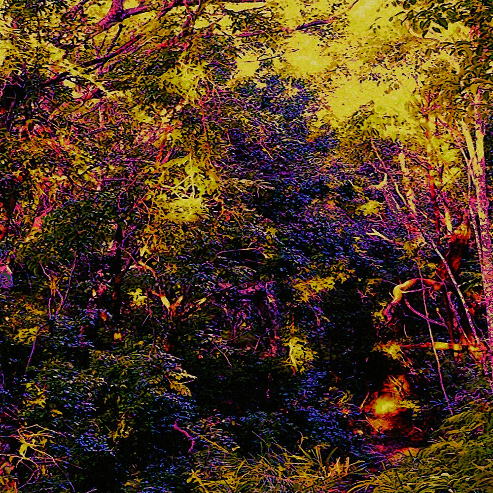 Whimsical Forest by Elias