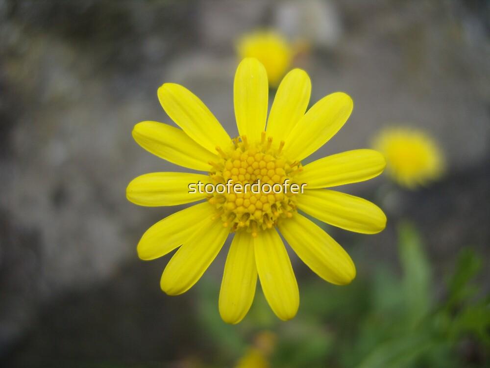 Yellow by stooferdoofer