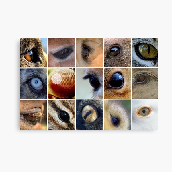 Animal Eyes Canvas Print