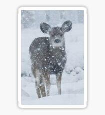 Colorado Snowstorm Sticker