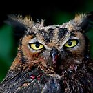 Pondering Owl by John Leeman