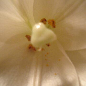 Flower by TheRedTraveler