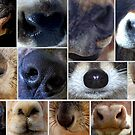 Noses by Betsy  Seeton
