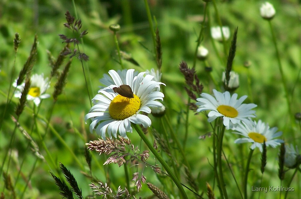 Butterfly. 1 by Larry Kohlruss