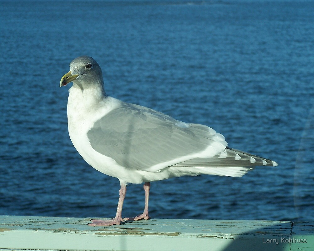 Seagull 2 by Larry Kohlruss