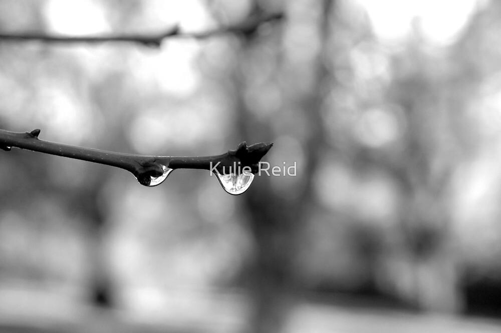 Winter by Kylie Reid